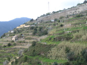 The Terraced Hills of Cinque Terre