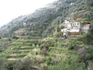 The Terraced Hills of Cinque Terre with House
