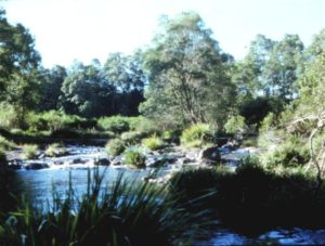 Wilsons Creek